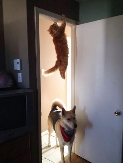 reacoes-gatos-no-trabalho-1-413x550