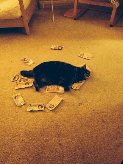 reacoes-gatos-no-trabalho-12-413x550