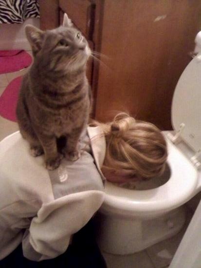 reacoes-gatos-no-trabalho-13-413x550