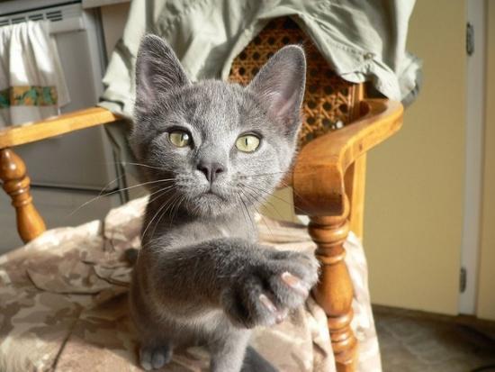 reacoes-gatos-no-trabalho-19-550x413