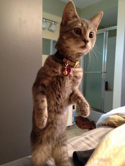 reacoes-gatos-no-trabalho-3-413x550