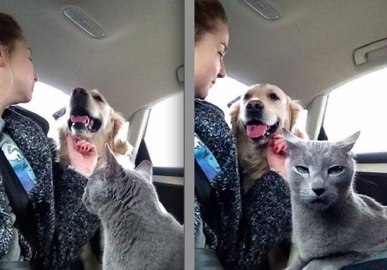reacoes-gatos-no-trabalho-4-550x384
