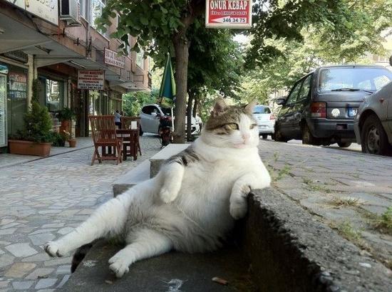 reacoes-gatos-no-trabalho-44-550x410
