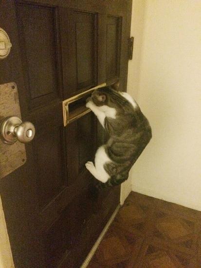 reacoes-gatos-no-trabalho-9-413x550