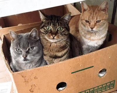 scatola-gatti