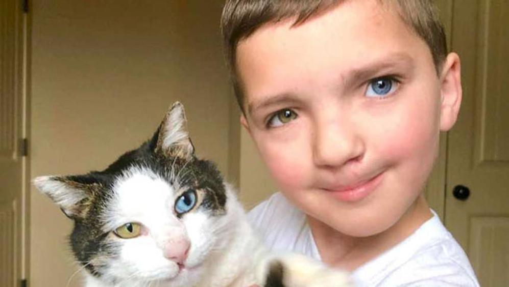 Un Bambino Bullizzato Trova Conforto Nellamicizia Di Un Gatto Che