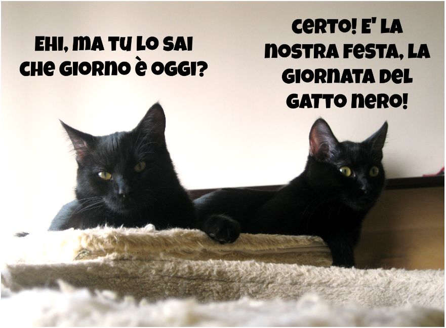 www grande nero micio