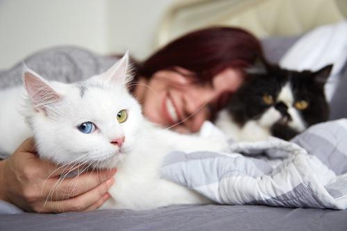 Servizio di incontri di gatto