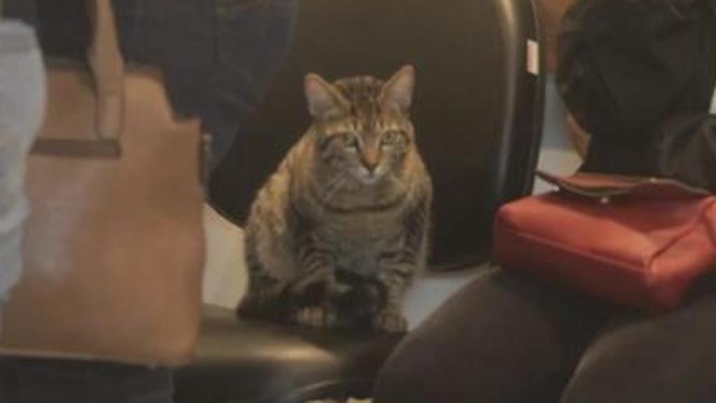 Un Gatto Scappa Di Casa Per Dare L Ultimo Saluto Alla Sua