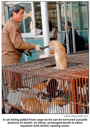 Cina: cani e gatti usati per pellicce - Per appassionati di gatti