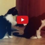 Gatto chiede scusa al suo a-micio [VIDEO] .. Mhaaaa