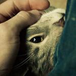 Come il tuo gatto ti dice Grazie !!