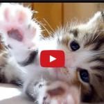 Questa piccola e dolce gattina si chiama Ottavia