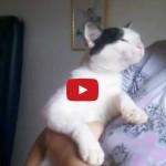 Gatto vuole restare in braccio alla sua mamma.