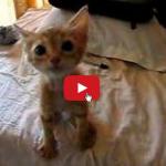 Trova un gattino denutrito in India lo porta in albergo e lo sfama.