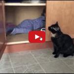 Il gatto rinchiude il bimbo in cucina.