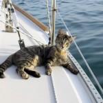 In barca col gatto: Abbandonano tutto e girano il mondo in barca a vela