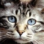 Anche i gatti soffrono per la scomparsa di una persona amata o un compagno di giochi.