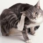 Antiparassitario naturale per i gatti