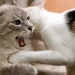 Perché a volte il gatto non socializza con gli altri mici in casa ?