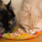 La giusta quantità di cibo da somministrare ai gatti.