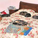 Se state vivendo alcune o tutte di  queste situazioni, sappiate che il rapporto umano-felino è assolutamente definito.