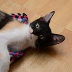 Un gatto in casa: Di cosa ha bisogno e che senso hanno per lui le cose.