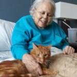 Quando un gatto ti ama.