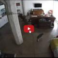 Gatto fa smettere al cane di abbaiare e lo rimprovera.