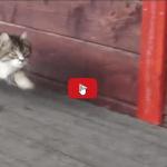 Questo gattino deve aver ricevuto un'educazione militare, attenzione alla camminata.