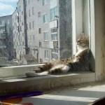 Per vivere con un gatto..