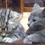 Anche i gatti piangono un lutto: come aiutarli?