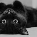 Un gatto per poter essere chiamato tale deve rispettare le 13 regole d'oro che stanno alla base del suo io