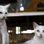 """""""Scegli o me o i gatti"""", la moglie lo abbandona per i suoi amati felini"""