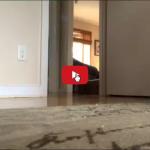 Un gatto tigrato con delle enormi zampotte.