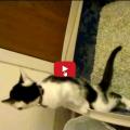 Piccolo gattino ha un modo insolito di fare la pipì