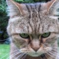Anche il gatto fa i capricci