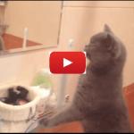 Il mio gatto Cesare passa gran parte della sua giornata a guardarsi allo specchio