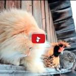 Paesaggio invernale con stupendi gatti siberiani