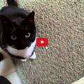 Al gatto non piace la mia canzone
