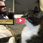 Un caso molto strano un gatto vuole avere rapporti solo con il suo papà