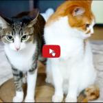 Arriva un nuovo gatto e il padrone di casa non è contento