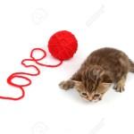 Se un gatto non è coccolone non vuol dire che non ti ama.