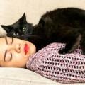 Beebz: il gatto angelo custode di un'adolescente epilettica