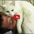 Il Gatto Sveglia - Compilation