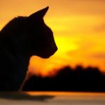 Il gatto e le sue capacità