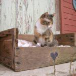 Idee per realizzare cucce per gatti riutilizzando vecchie cassette di legno