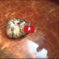 Le olive: Ogni gatto ne va matto perché ?