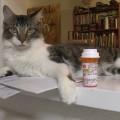 Perché i gatti buttano gli oggetti giù dal tavolo?