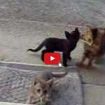 Gatta porta i cuccioli a far visita ai nonni umani